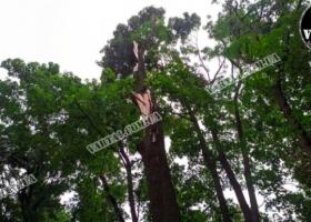 Во Львове на свидании погибла молодая пара. На них упало дерево