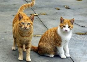 В Ривном депутаты на сессии займутся котами и их правами