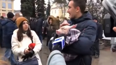 К приезду Порошенко в Луцке «арестовали» свинью в подгузниках. Оказалось – зря