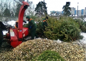 Использованные елки киевлян превратят в треску