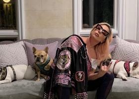 История с похищением собак Леди Гаги получила неожиданную развязку