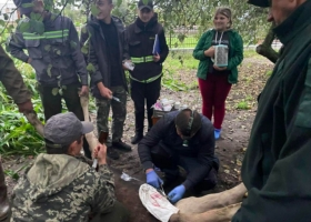 Спецоперация: на Волыни спасли лосенка, который травмировался об острый забор