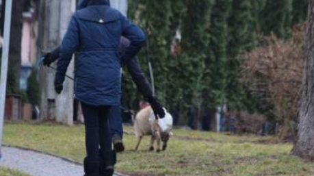 Свинская угроза: полиция уберегла президента от встречи с необычными избирателями