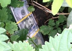 Доцент в Житомире обещал поступление в вуз за $2900