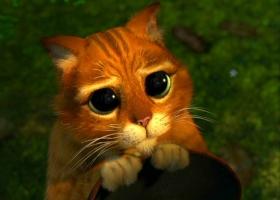 «Укрзализныця» извинилась за клопов картинкой с виноватым котиком