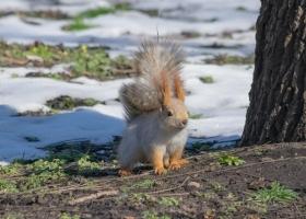 Гололедица и снег: синоптики рассказали, как в Украине начнется весна