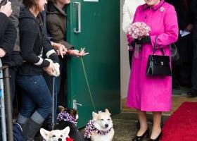 Британская королева нарушила свои планы и взяла под опеку еще одного питомца
