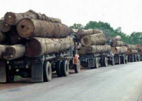 «Лесной тупик» Владимира Гройсмана