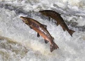 Красное и черное: Ульяна Супрун рассказла украинцам о сложном выборе между осетром и лососем