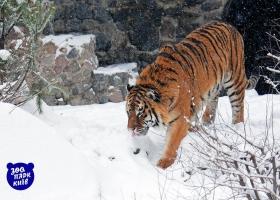 Как дикие и экзотические животные в зоопарке переживают зиму