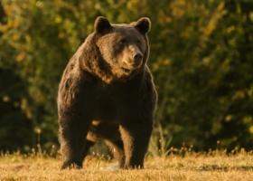 Принца обвинили в убийстве самого большого медведя в Евросоюзе