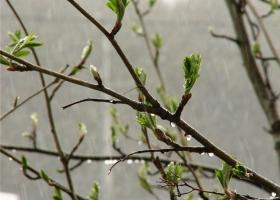 Украину будет заливать дождями: синоптики дали детальный прогноз до конца недели