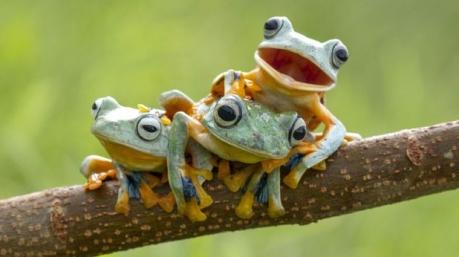 Маразмы дня: национальная «жаба» Луценко, детектор лжи в Минобороны и заевшая пластинка Президента