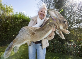 Репутацию United Airlines подмочила смерть гигантского кролика