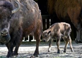 В столичном зоопарке пополнение: стало известно имя новорожденного малыша