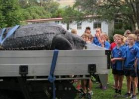 На берег Новой Зеландии вынесло черепаху длиной около 2,5 метров