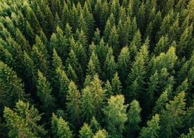 В украинских лесхозах нашли нарушения почти на 250 миллионов гривен