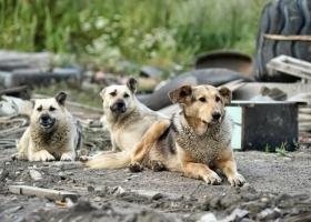 На Львовщине собаки притащили во двор человеческую ногу