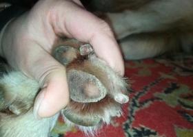 От смеси, которой дворники посыпали дороги, у собак разъедает лапы (ФОТО)