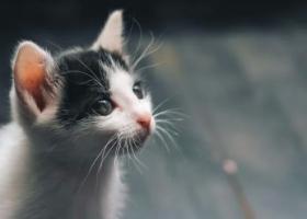 Взял за лапы и разорвал: во Львовской области мужчина жестоко убил котенка