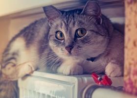 Кличко пообещал, что в Киеве не будут повышать тарифы на отопление