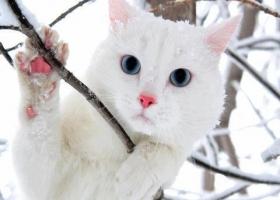 Отморозила лапы: в Одессе сняли с дерева кошку, просидевшую там на морозе трое суток